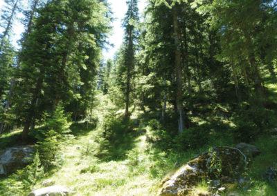 Habitats forestiers