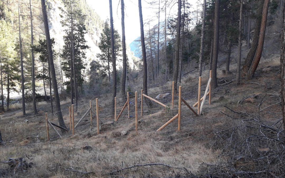 Pourquoi des enclos à proximité du chalet forestier des Combes ?
