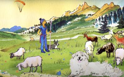 Chiens de protection des troupeaux – la bonne cohabitation est l'affaire de tous !